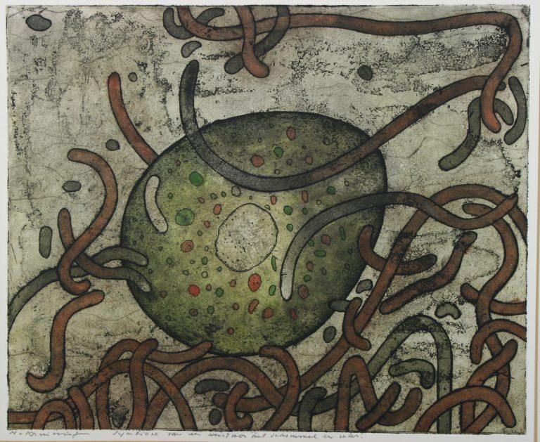Korstmos, symbiose van alg en schimmel, 1980